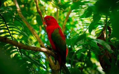 ¿Sabes qué es Turismo de Naturaleza?