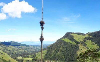 La Palma mas alta del mundo