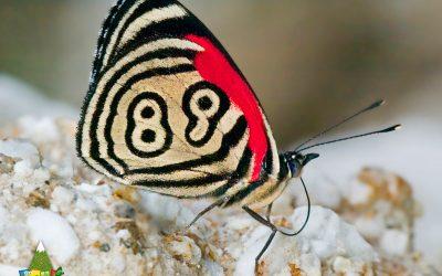 Conoces la Mariposa 89?